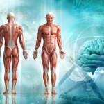 мышцы позвоночник